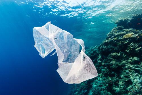 Česká pobočka Greenpeace bojuje proti jednorázovým plastům
